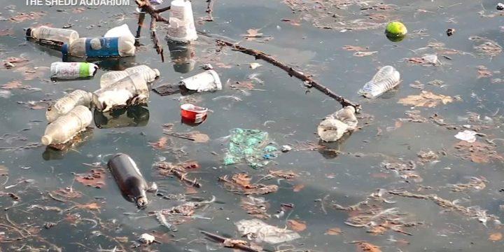 """هدف """"جولای پلاستیکی رایگان"""" در آکواریوم Shedd کاهش ضایعات پلاستیکی ، آلودگی در دریاچه های بزرگ است"""